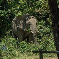More Trees - Image - Forests - Kenya